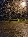 Winged termites swarming IMG 20201021 191747.jpg