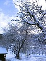 Winter im Heimgarten Bülach - panoramio.jpg