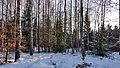 Winter in the forest - panoramio.jpg