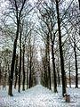 Winters bospad - panoramio.jpg