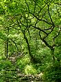 Wood in Hebden Dale (9272797166).jpg