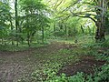Woodland at Lower Waterston - geograph.org.uk - 491155.jpg