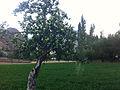 Yasin Valley farm.JPG
