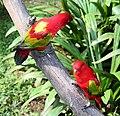 Птица в полете - Классификация птиц.