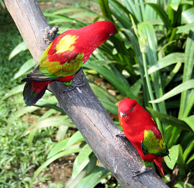 Birds of the Unique, Amazing, Unusual and Bizarre