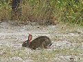 Yes, there is a bunny too. (5816337815) (2).jpg