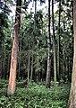 Zhukovskiy, Moscow Oblast, Russia - panoramio (33).jpg
