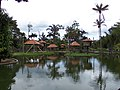 Zoológico de Manaus - AM.jpg