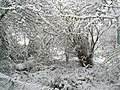 """I ain't seen snow like this since 1947"" - geograph.org.uk - 754066.jpg"