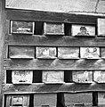 """Kraniči""- v čebujaku (čebelnjaku), Kočarija 1956.jpg"