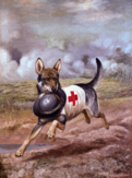 Mercy dog carrying a soldier's helmet (1918)