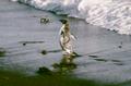 (Jubany) Pinguinos (1).png