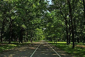 Ąžuolynas - Promenade in Ąžuolynas