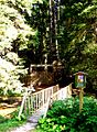 Žofínský-prales-1.jpg