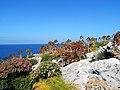 ΔΙΑΒΑΤΕΣ (νησί Μαρμαράς) Νατούρα.jpg