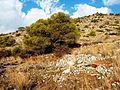 Κανάκια - panoramio - koupakia (2).jpg
