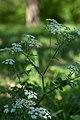 Андріївський ліс 07.jpg