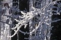 Буковий ліс в інії, дорогою до г.Томнатик.jpg