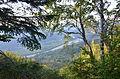 Вид на долину Черемоша.jpg