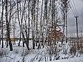 Заокский. Дачи за зимними березами. 14-01-2011г. - panoramio.jpg