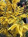 Квіти Ботанічний сад.jpg