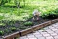 Київський зоопарк Гуска атакує 01.JPG
