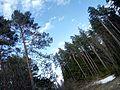 Лес до небес - panoramio.jpg
