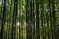 Лісництво, Сторожинецький район 3.jpeg