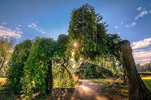 Літній вечір - Софіївка