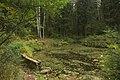 Малый Нижний Новошалейный пруд798.jpg