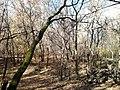 Молодой дубовый лес у села Нижняя Добринка..jpg