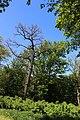 Парк «Феофанія» IMG 7420.jpg