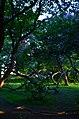 Парк имени Горького в Москве. Фото 9.jpg