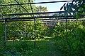 Сирецький дендропарк DSC 0022.jpg