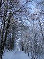 Съева Дупка - panoramio (11).jpg