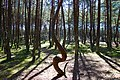 Танцующий лес на Куршской Косе.jpg