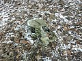 Череп лошади, найденный в лесу.jpg