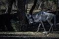 حیوانات باغ وحش مرکزی شهر تفلیس پایتخت گرجستان 26.jpg