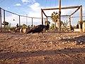 منتزه ثالت مارس 7 الرشيدية، المغرب.JPG