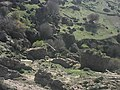 منظر طبيعي 8خلاب من قلعة بنى سلامةابن خلدون بلدية فرندة ولاية تيارت.jpg