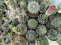 گلخانه کاکتوس دنیای خار در قم. کلکسیون انواع کاکتوس 11.jpg