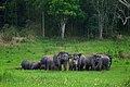ช้างป่าเขาใหญ่.jpg