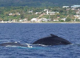 ʻEua - Humpback whales with Ohonua in the background