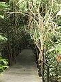 呀诺达雨林公园 - Yanoda Rainforest Tourism Zone - 2010.02 - panoramio.jpg