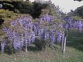 小石川植物園 - panoramio (3).jpg