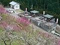 広橋梅林 デッキテラス周辺 Hirohashi-bairin (Grove of plum)2011.3.06 - panoramio.jpg