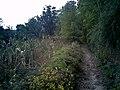 往山上走 - panoramio (1).jpg