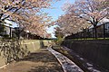 旧軽川緑地(Old Garu River green space) - panoramio (5).jpg
