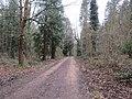 -2019-03-02 Track inside Bacton Woods, Norfolk (1).JPG