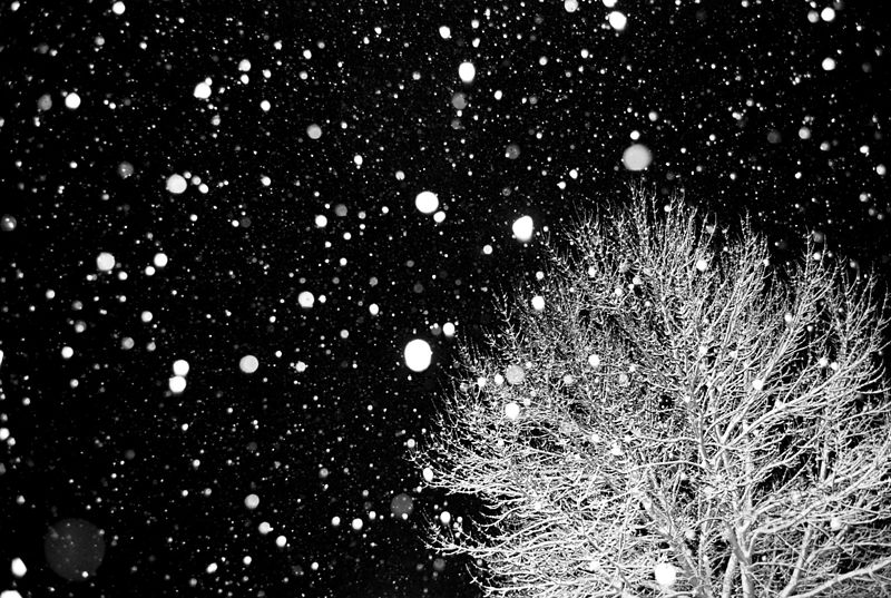 File:02 01 08 snow edit.jpg